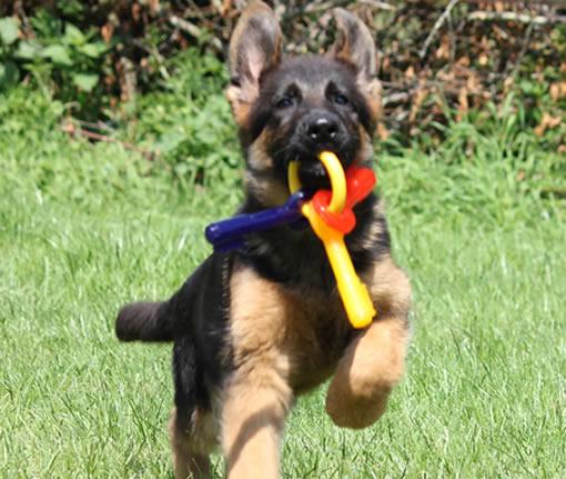 Bijt sleutelbos puppy