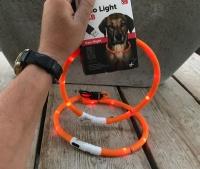 Led halsband hond oranje