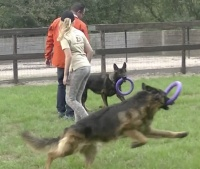 Speelhoepel hond