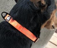 Halsband kleine hond