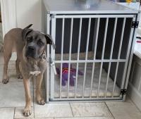 Honden bench zware kwaliteit