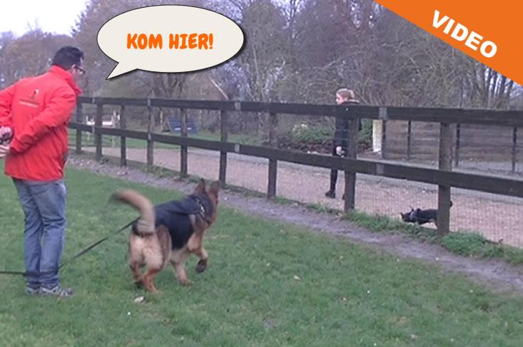 Hond leren komen op bevel