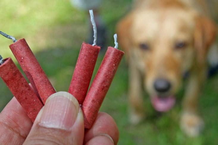 Honden en vuurwerk tips