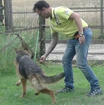 Hond commando vooruit leren