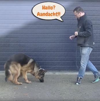 Hond heeft geen aandacht voor baas
