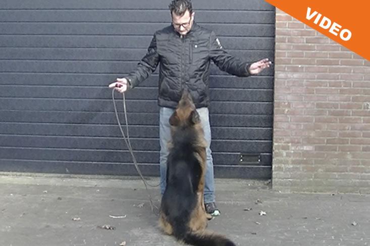 Hond heeft geen aandacht voor de baas