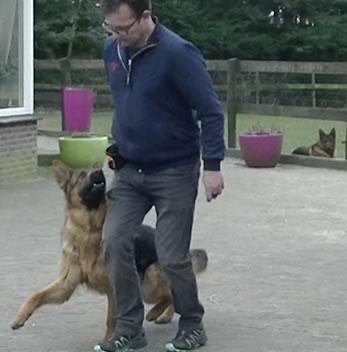 Hond leren volgen ipo