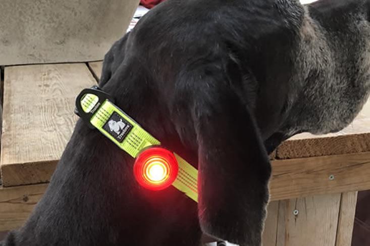 Halsband halsketting slipketting hond