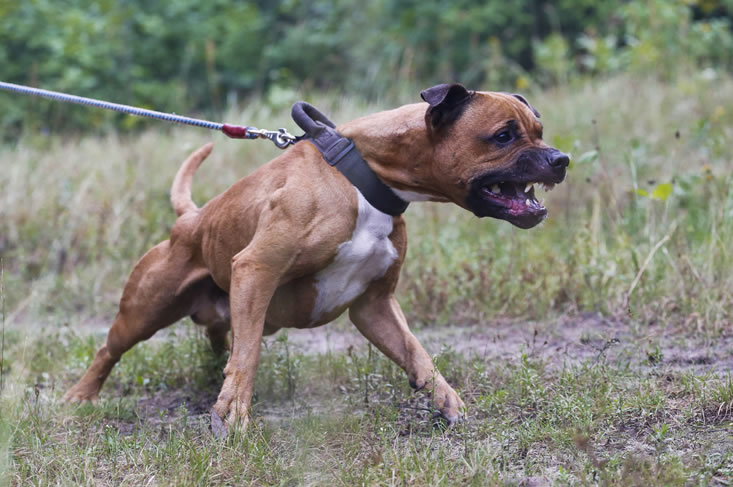 Nieuwe regeling agressieve honden