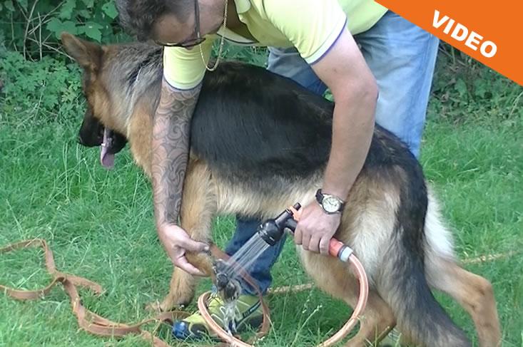 symptomen oververhitting hond