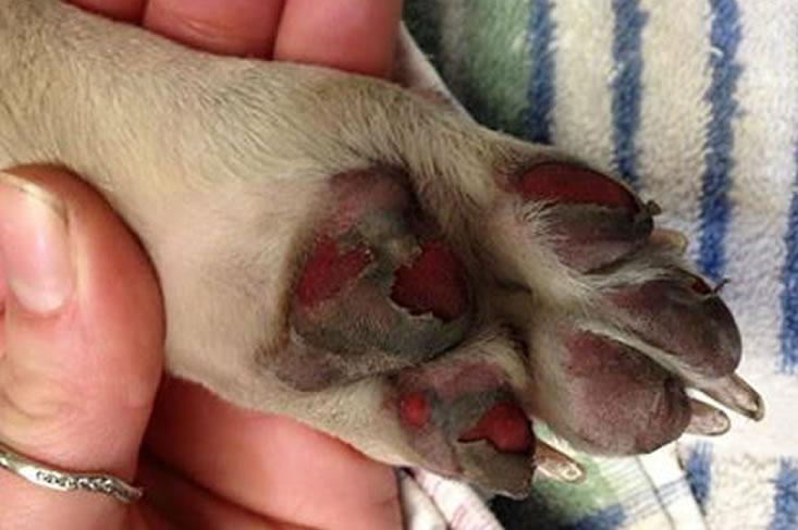 Voetzooltjes hond verbrand