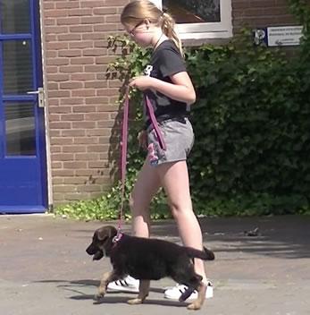 Pup wil niet aan de lijn lopenn